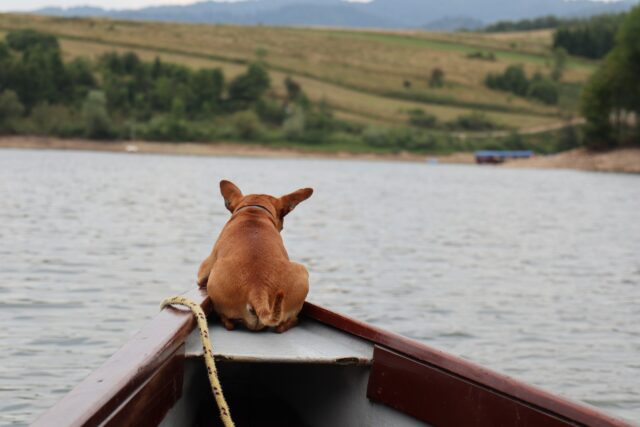 Dog riding in boat