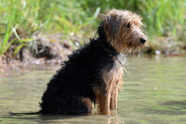 Dog standing in lake water