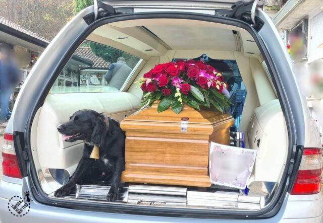 Dog stays by casket