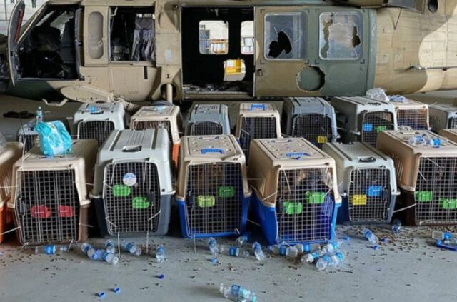 Dogs Abandoned in Afghanistan