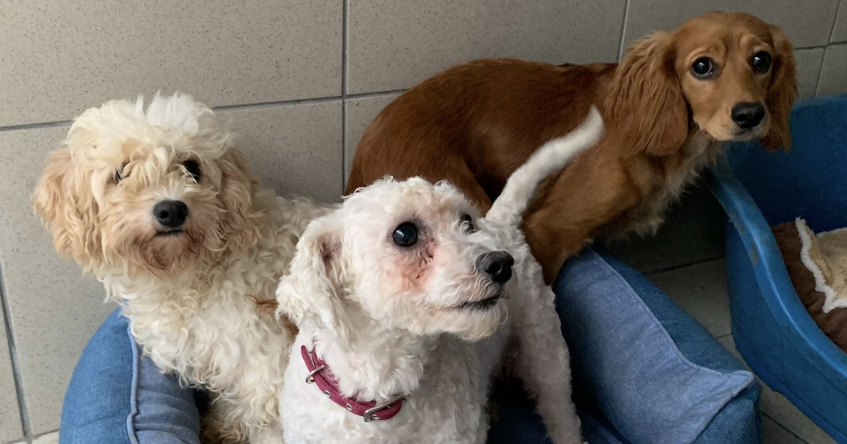 Dogs saved from puppy farm