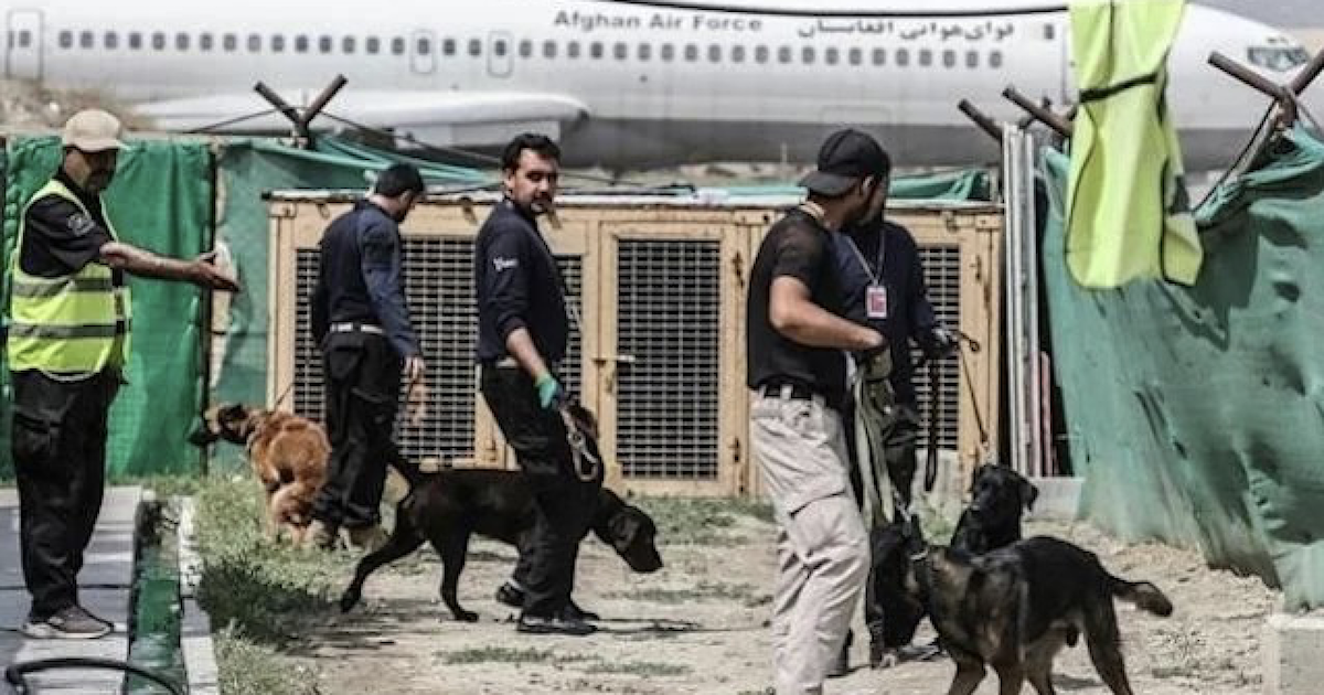 Dogs in Kabul Airport