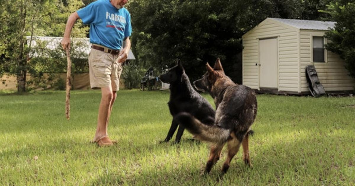 German Shepherd saves human from stroke