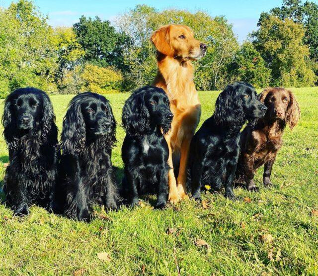 James Middleton Six Dogs