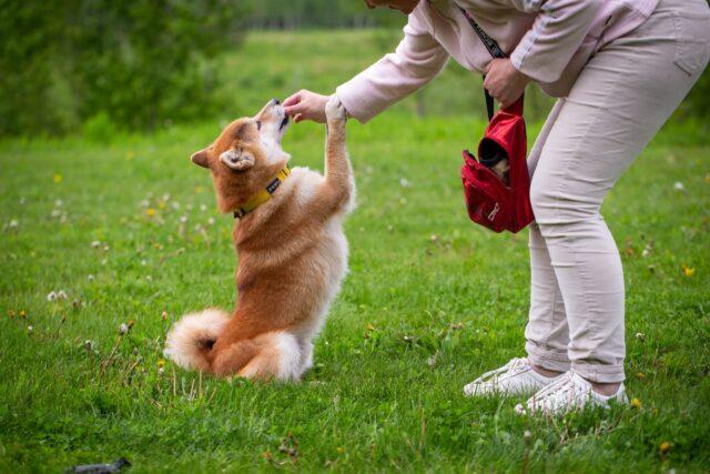 Person training dog
