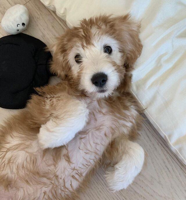 Puppy fur color change