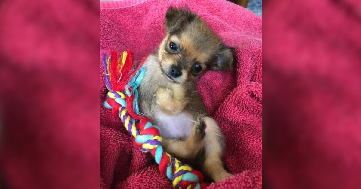 Breeder Discarded Puppy Born Without Front Legs But Now She's Thriving