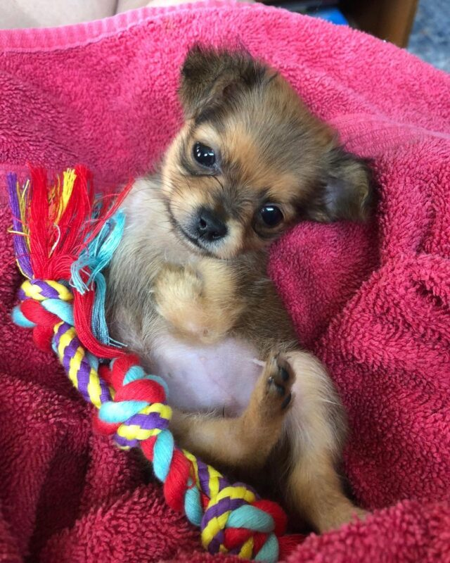 Puppy with no front legs