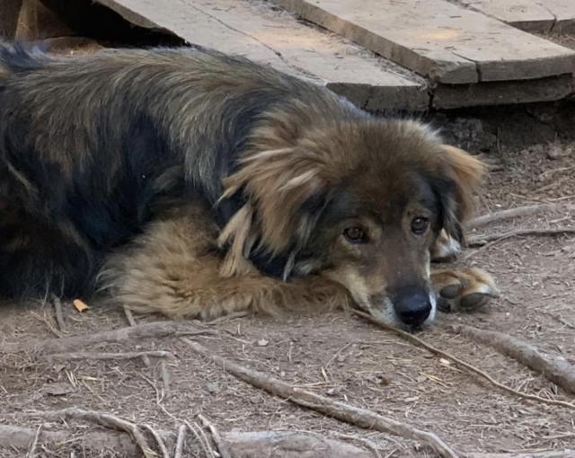Rescue dog resting