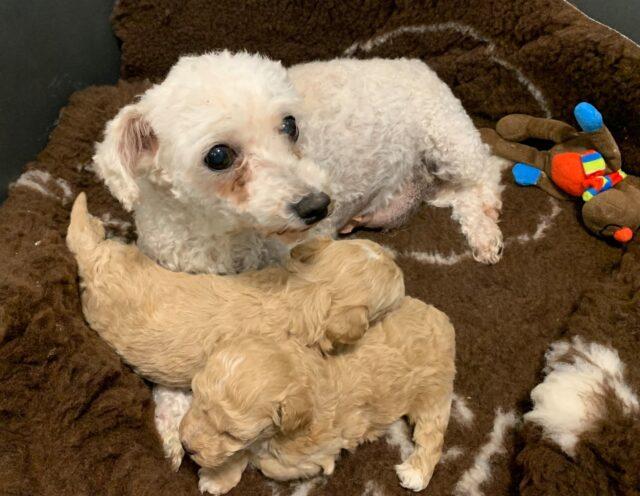 Scared dog nursing puppies