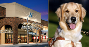 Service Dog Refused from Business