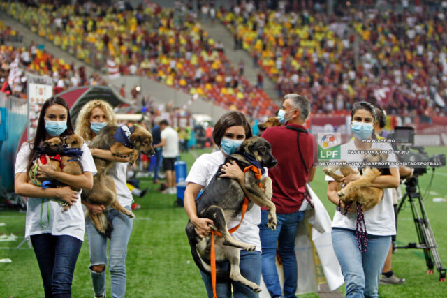 Shelter dogs come to soccer game