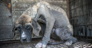 South Korea Ends Dog Meat Consumption
