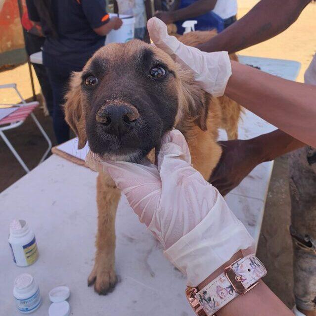 Stray dog at shelter