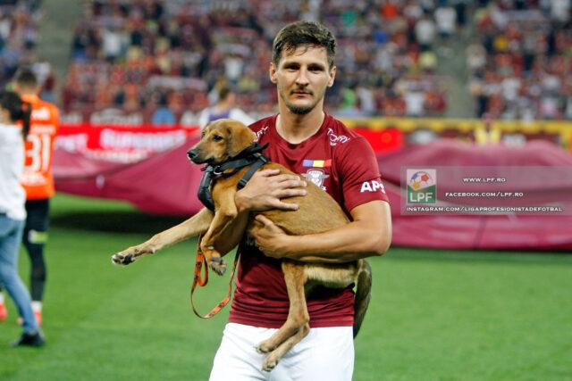 Stray dog at soccer game
