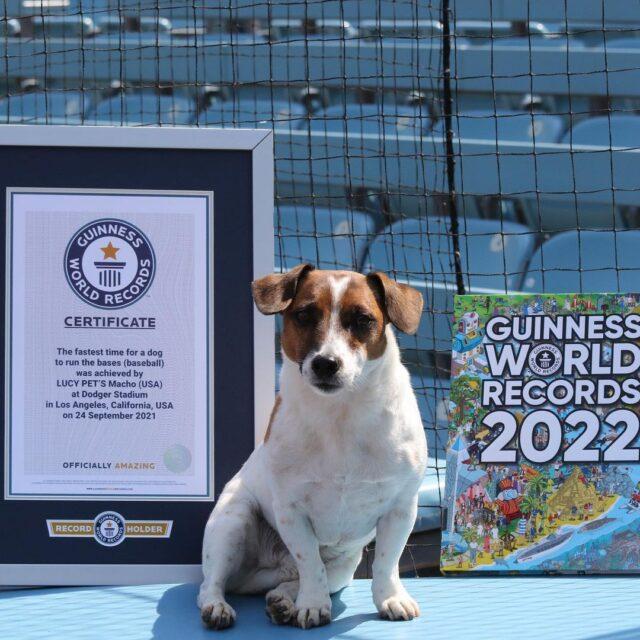 Terrier Guinness World Record