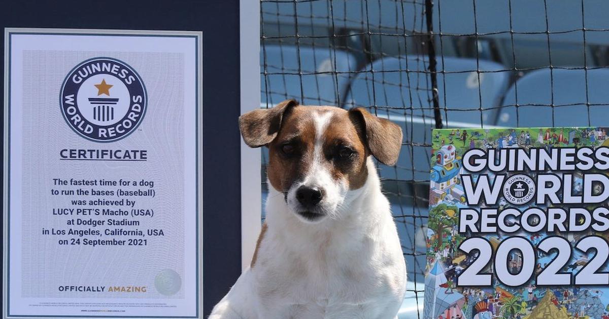 Terrier runs bases record