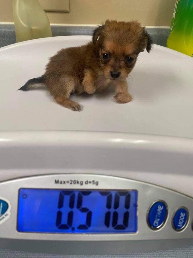 Tiny puppy weight