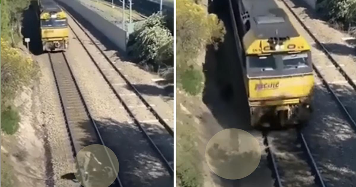 Dog on train tracks video