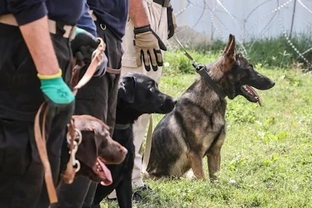Working Dogs in Afghanistan