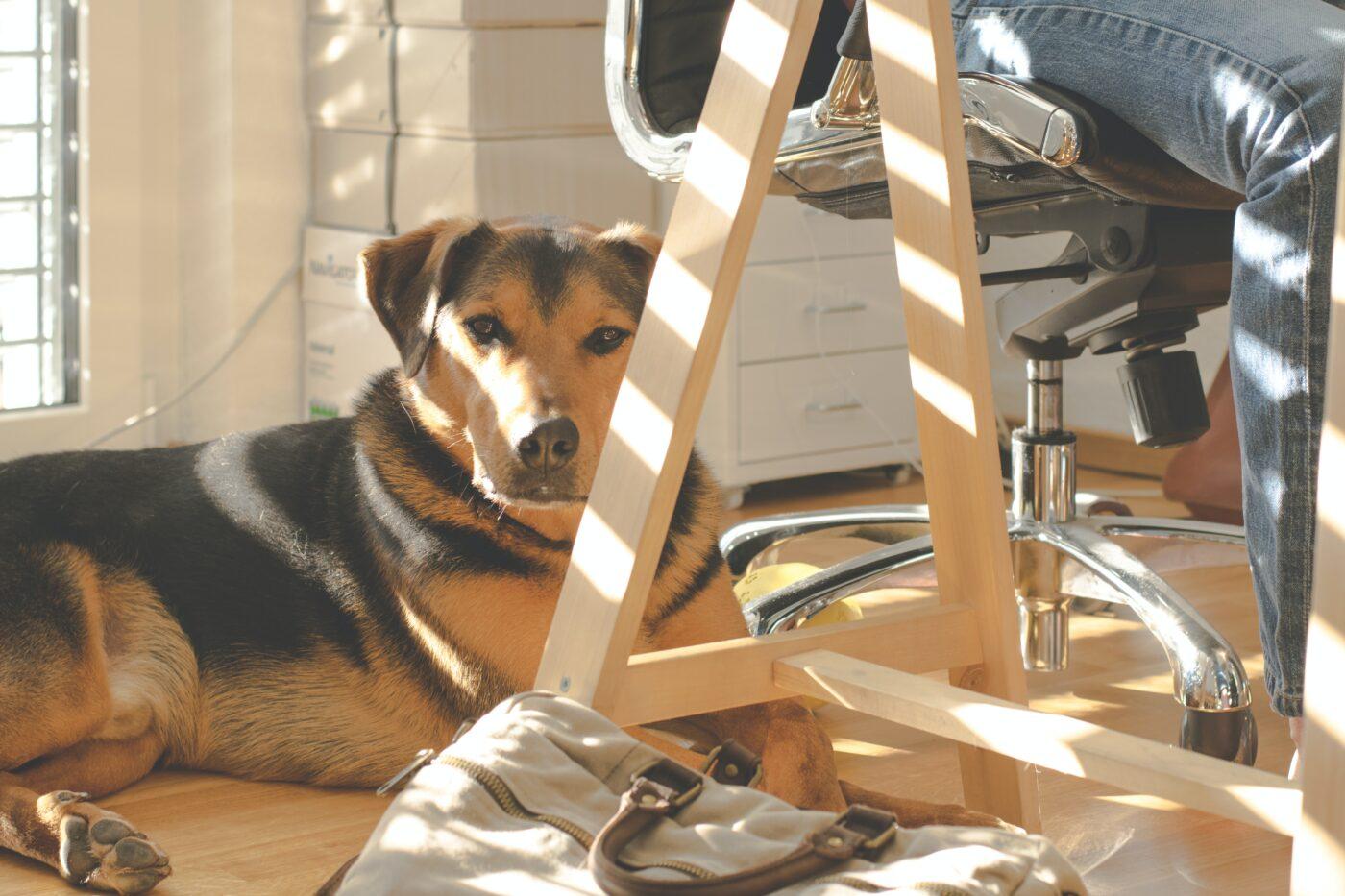 dog friendly office
