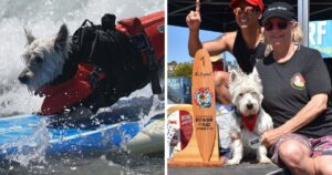 surf dog cover