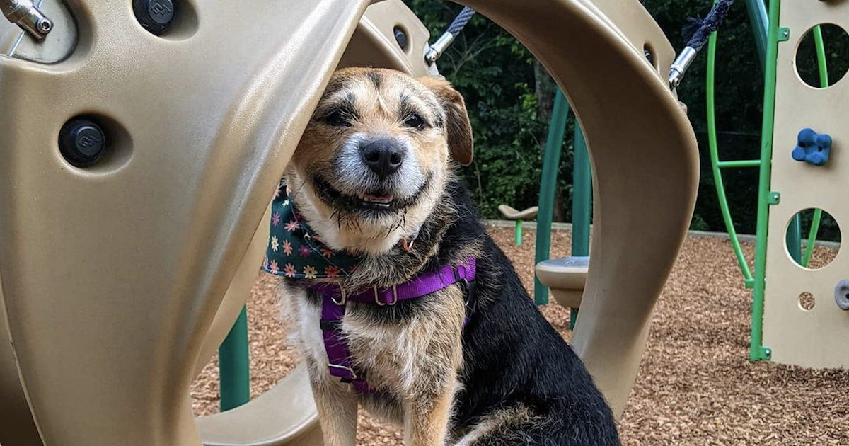 2021 People Cutest Rescue Dog Finalist