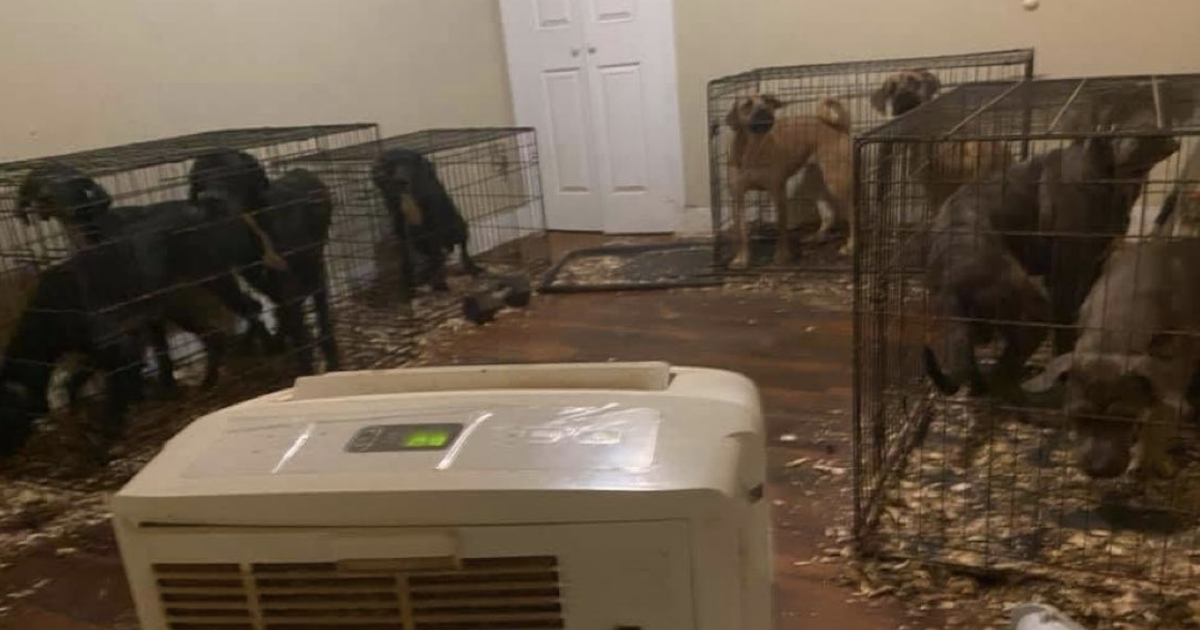 Apartment puppy mill