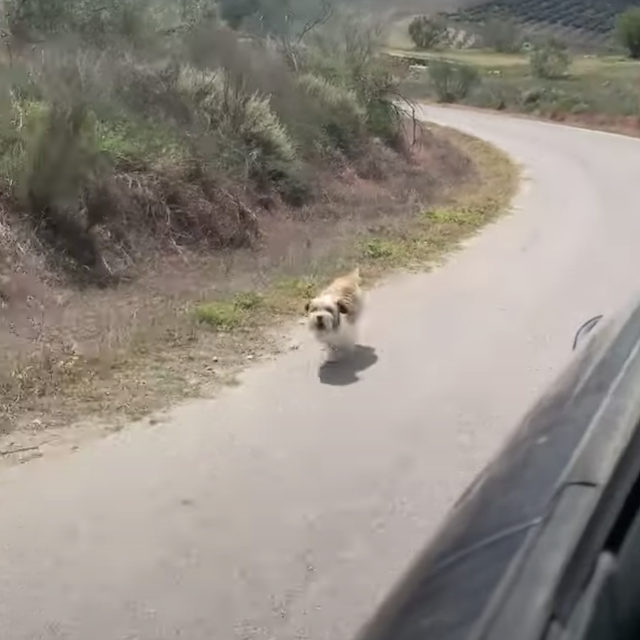 Dog chasing after car