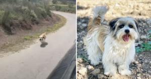 Stray dog chasing car