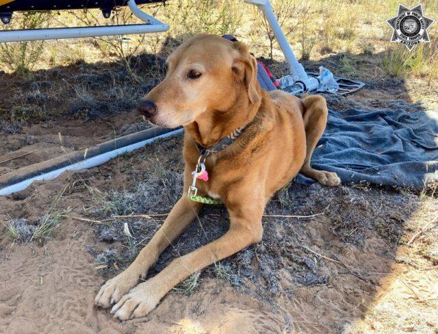 Dog near the wreckage.