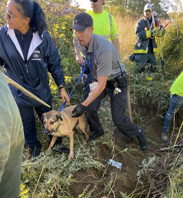 Dog rescued from drain pipe