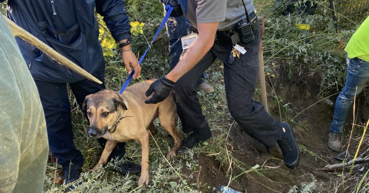 Dog saved from storm drain