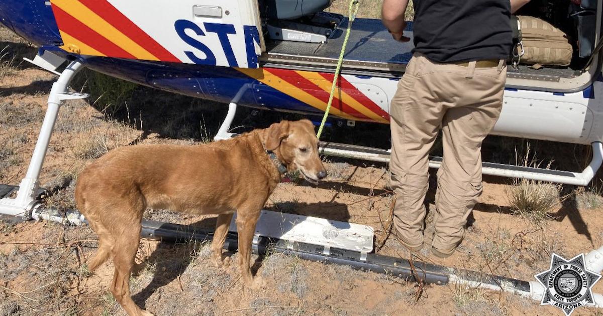 Dog survives plane crash