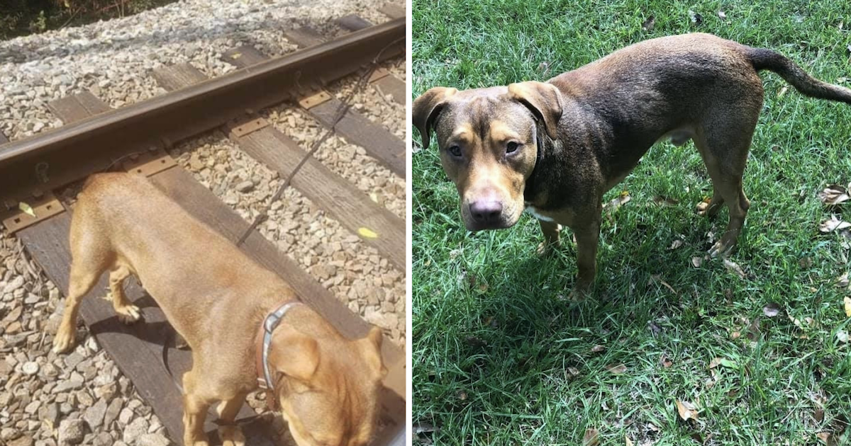 Dog tied to train tracks