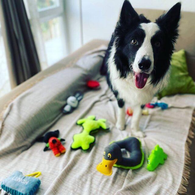 Genius Dog Challenge Toys