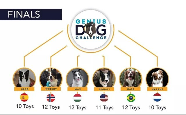 Genius dog rankings