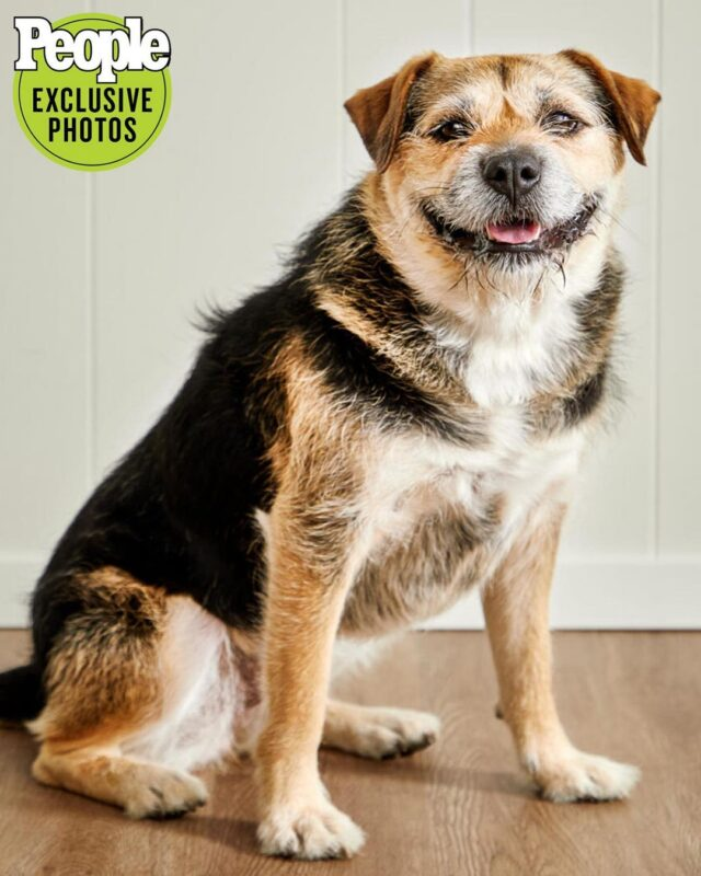 Heaven World's Cutest Rescue Dog