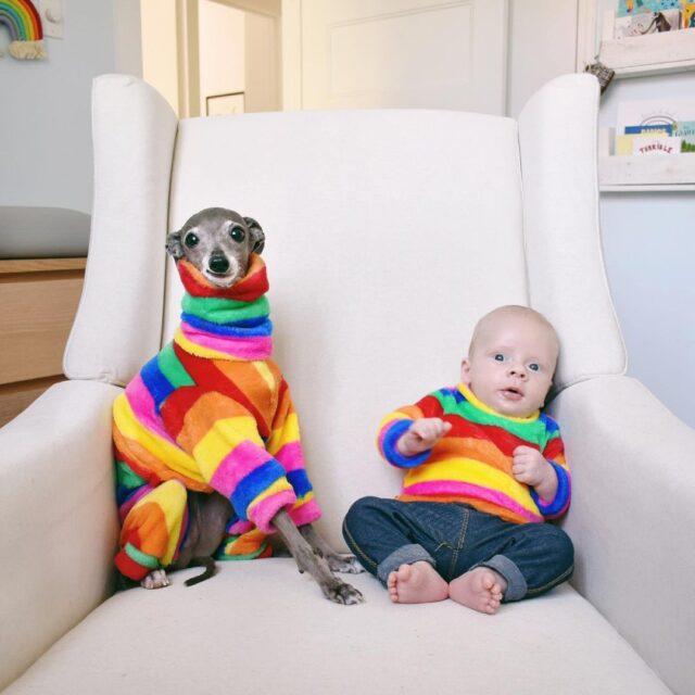 Italian Greyhound and Baby
