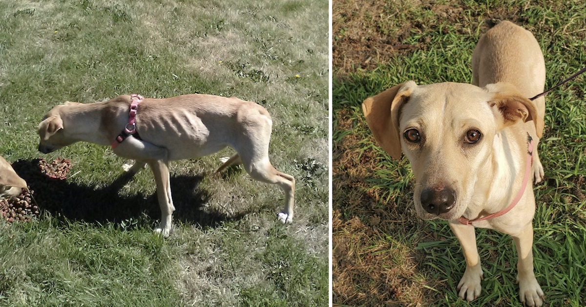 Malnourished dogs rescued