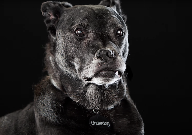 Overlooked shelter dog