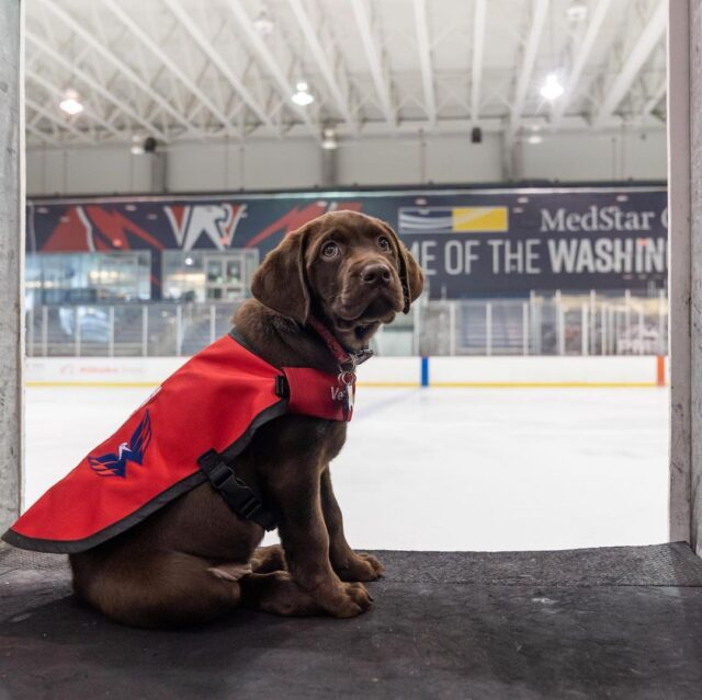 Puppy by ice rink