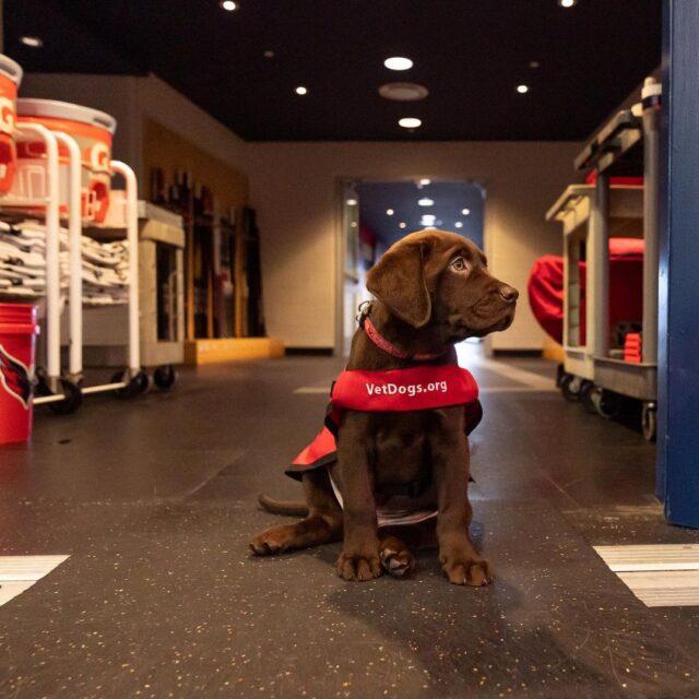 Puppy in locker room