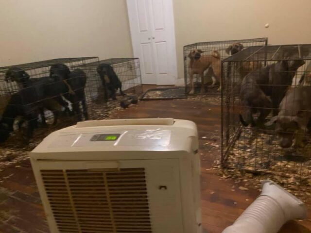 Puppy mill in apartment