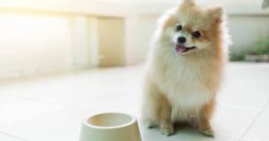 PureVita dog food recall