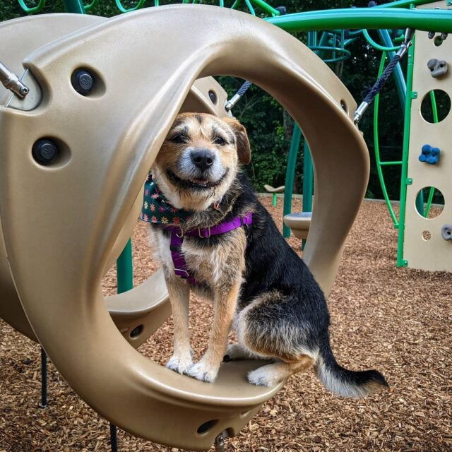 Save the dog on the playground.