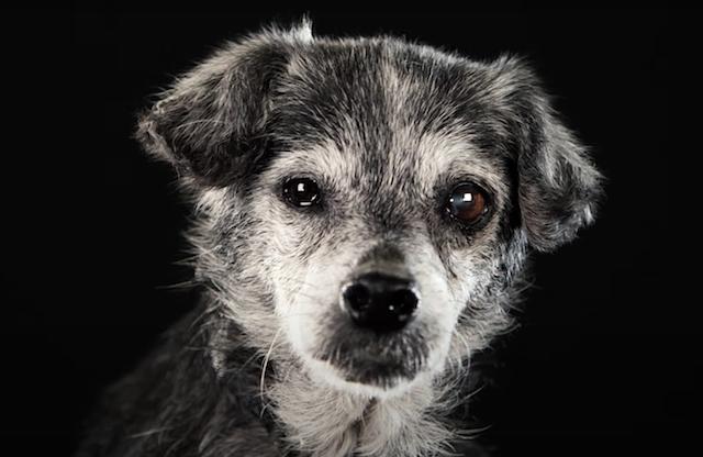 Senior Dog Underdog