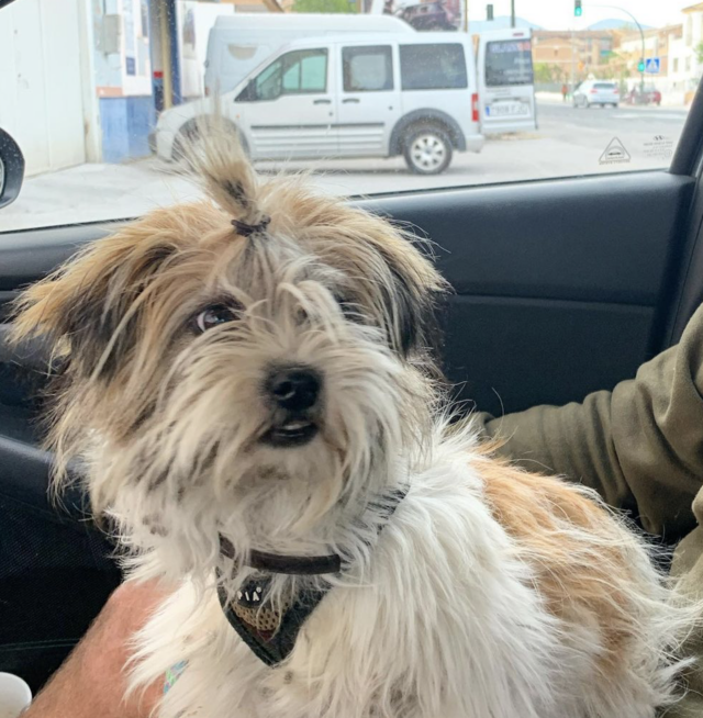 Shorkie Rescued from Rural Road