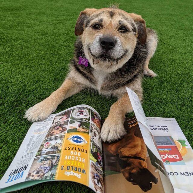 Smiling dog reading People magazine