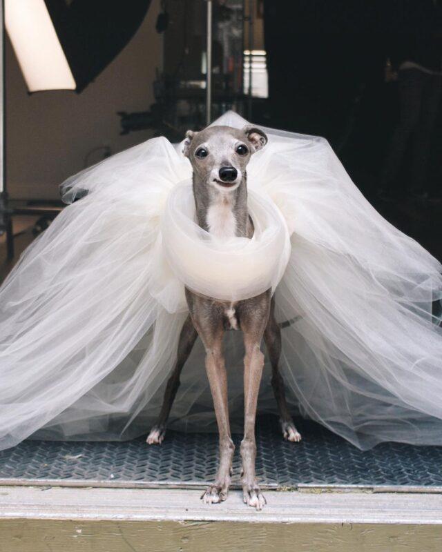 Tika white dress